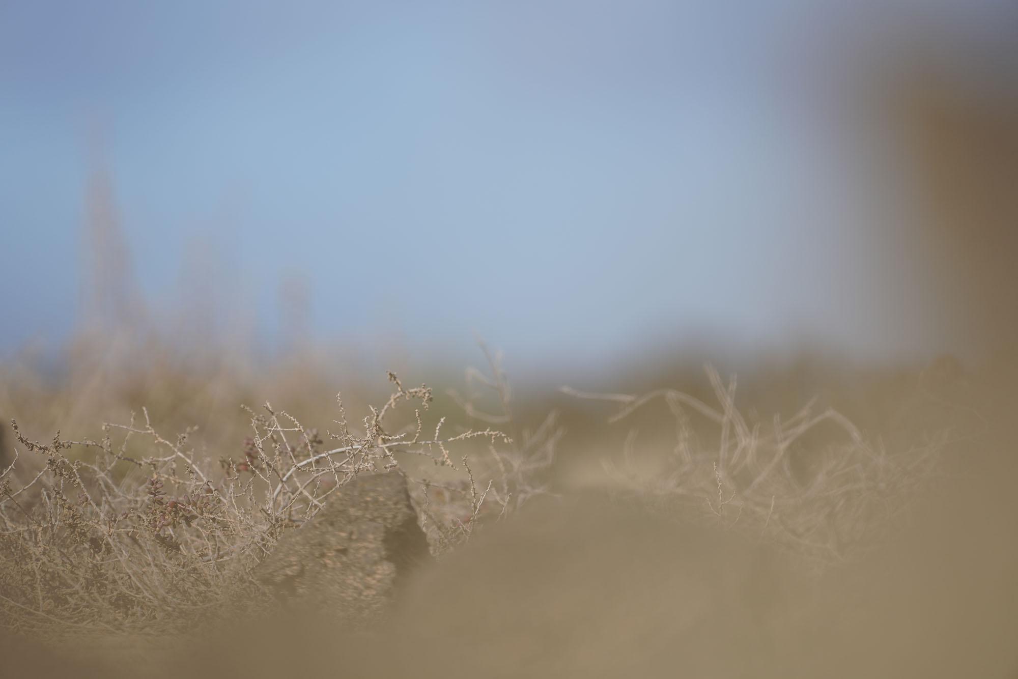 Zandwind | Foto