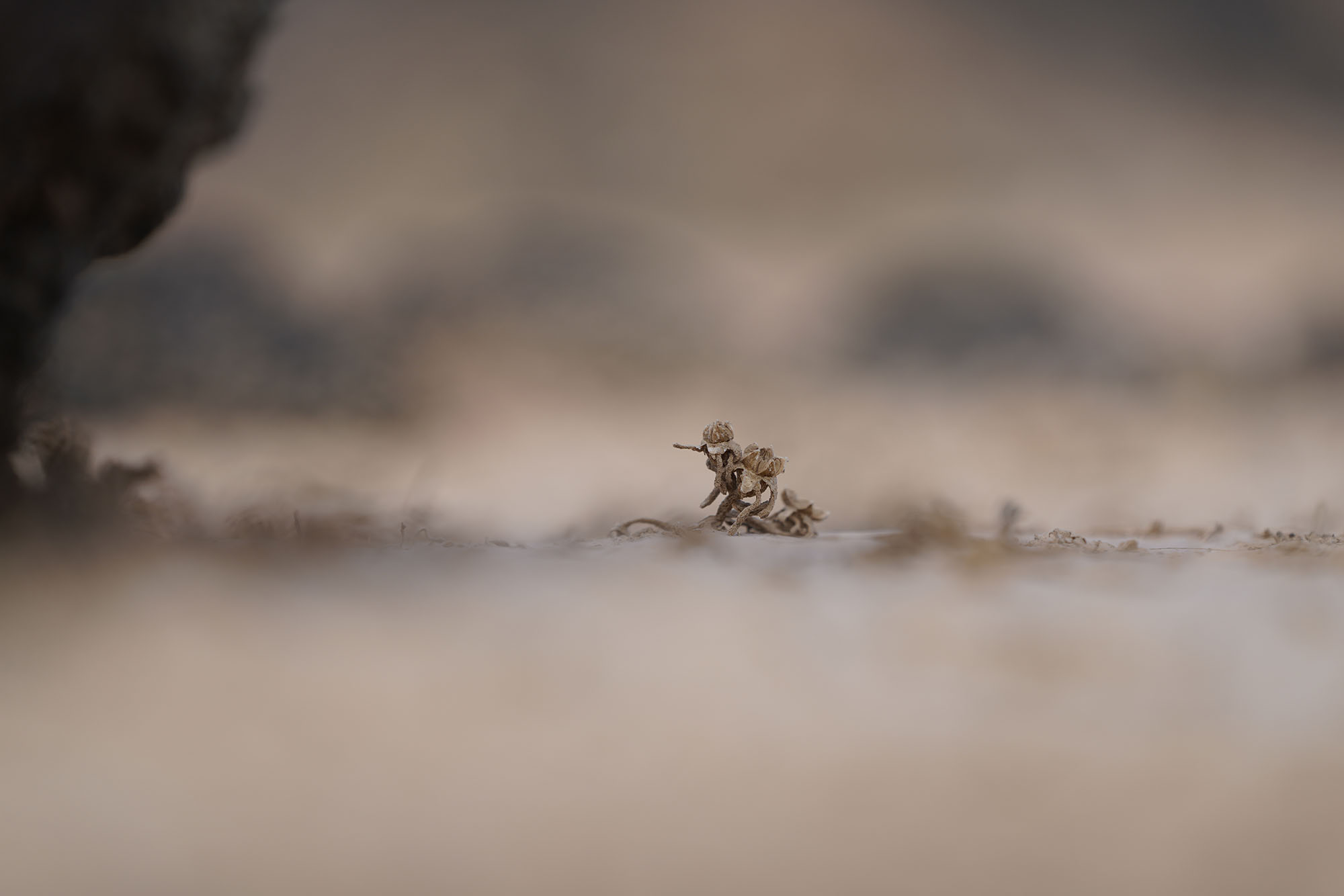 Reiziger | Foto
