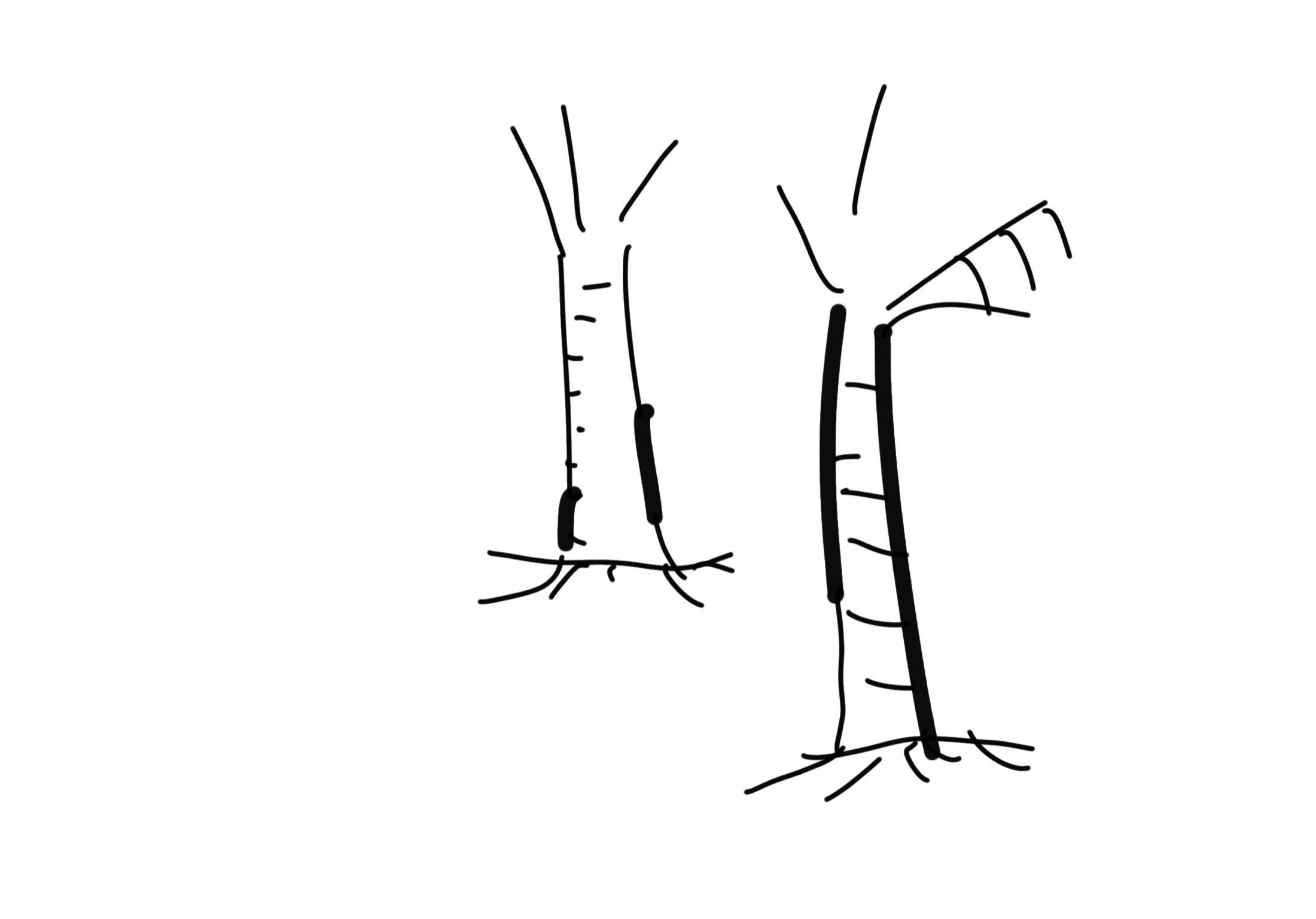 Positionering | Lijntekening
